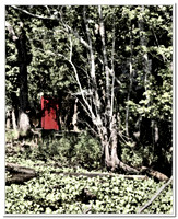 1753 RED outhouse REDO