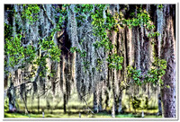 2170 spanish moss HDR effect