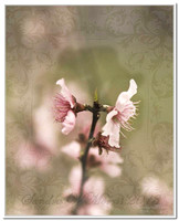 3199 peach blooms framed PF4 overlay