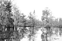 3364 swamp scene PS4 BW