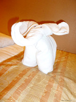 291 towel elephant 020611 copy