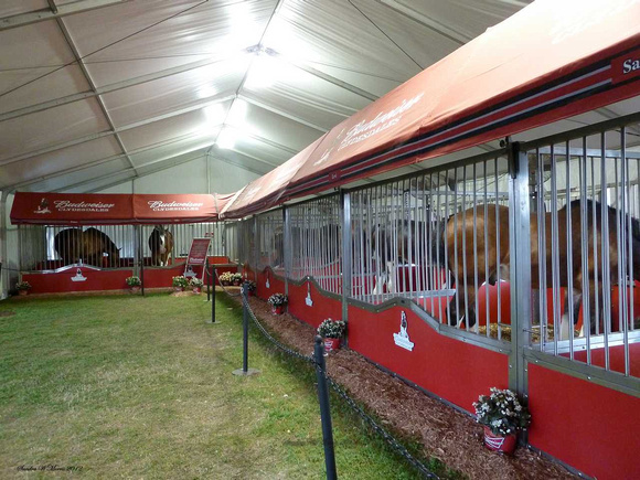 593 the Clydesdale tent